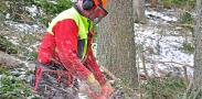 conditions travail filière bois
