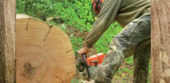 bucherons-forestier-article.png